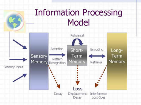 processes and stages of memory Encoding is the crucial first step to creating a new memory it allows the perceived item of interest to be converted into a construct that can be stored within the brain, and then recalled later from short-term or long-term memory encoding is a biological event beginning with perception through the senses the process of laying down a memory begins with attention (regulated by the thalamus.