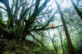 Person sitting on tree limb