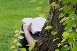 image of person sitting against tree and reading